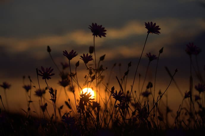 Flower Sunset Evening Background Image