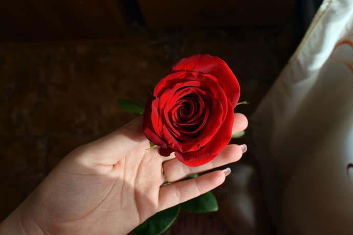 Evening Image with Red Rose in the Hand