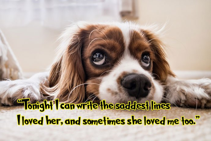 sad dog whatsapp quote image
